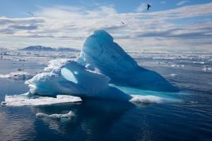 arctic n1